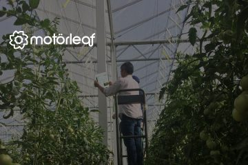 Motorleaf Reveals AI-Powered Yield Prediction For Commercial Greenhouses