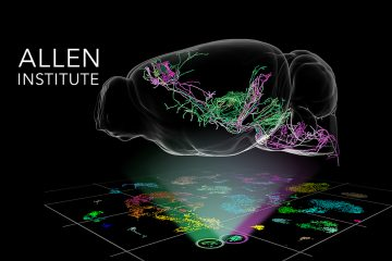 A Comprehensive 'Parts List' Of The Brain Built From Its Components, The Cells